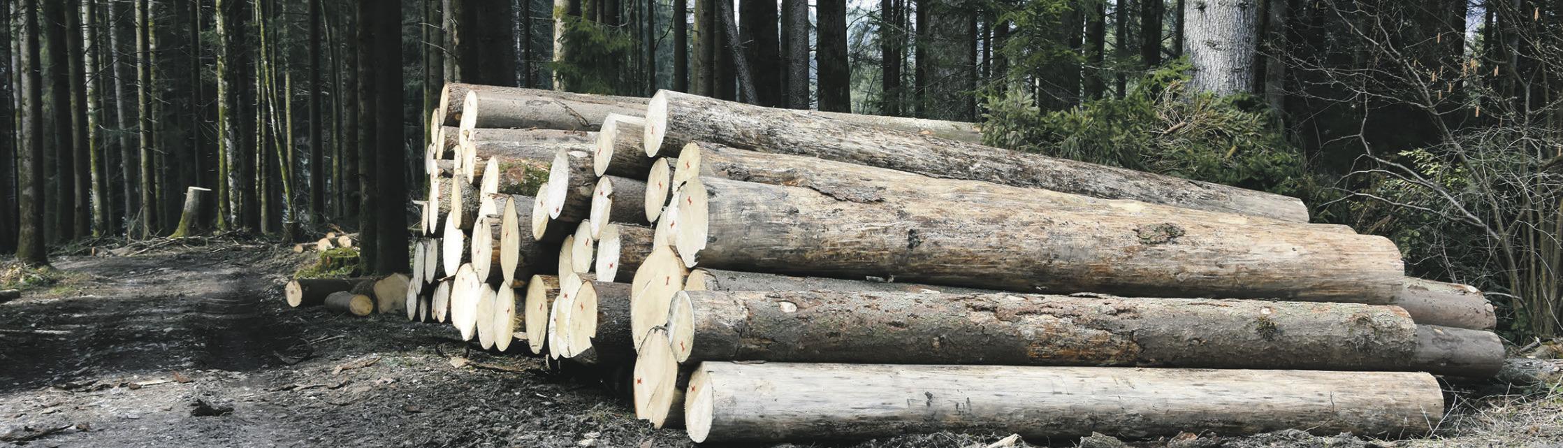 95'000 Kubik Holz geerntet