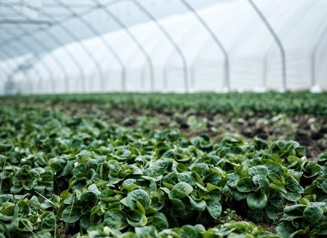 Italia, l'agricoltura più verde in Europa