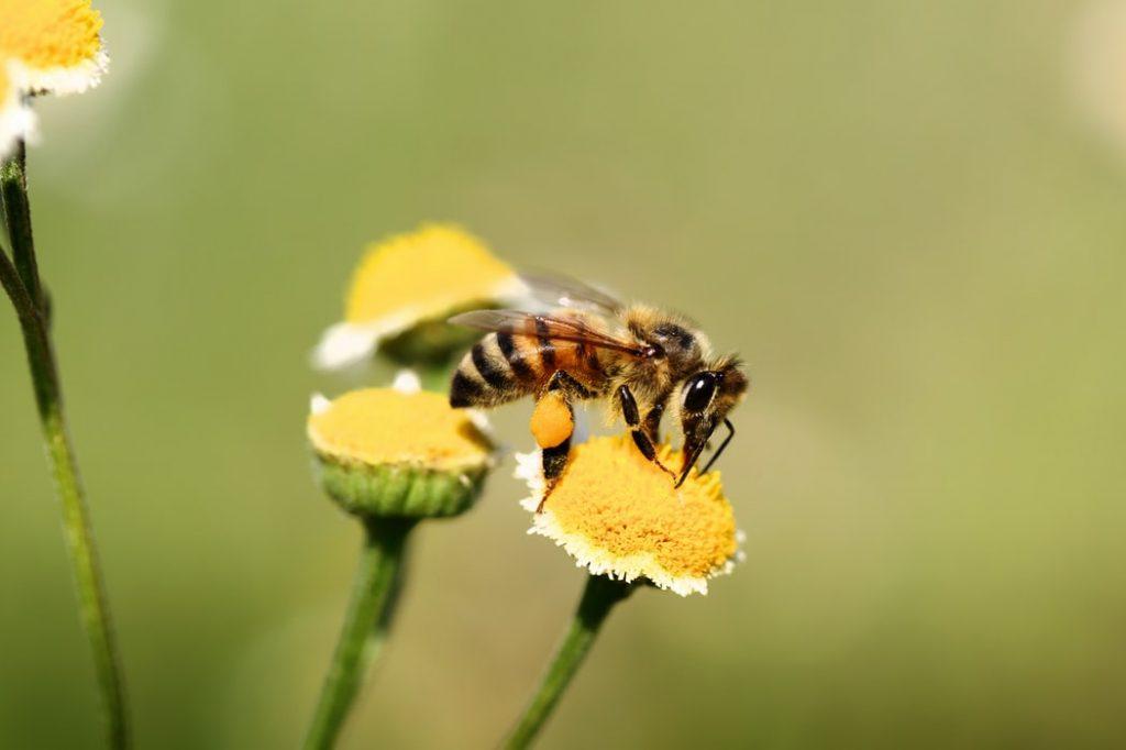 Miele e alveari, la Regione investe circa 800mila euro